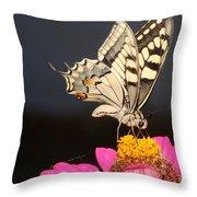 Swallowtail On Pink Flower  Throw Pillow
