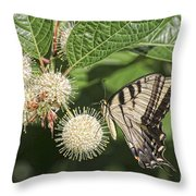 Swallowtail With Flowers Throw Pillow