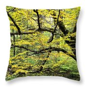 Swamp Birch In Autumn Throw Pillow