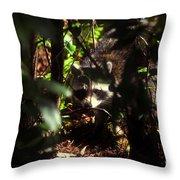 Swamp Raccoon Throw Pillow