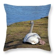 Swan 577 Throw Pillow