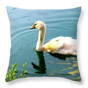 Swan Cygnet By Earl's Photography Throw Pillow