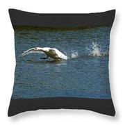 Swan Landing 2 Throw Pillow