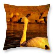 Swan Near Sundown Throw Pillow