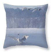 Two Swans Landing Throw Pillow
