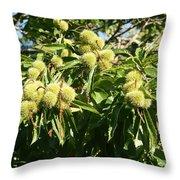 Sweet Chestnut Throw Pillow
