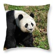 Sweet Chinese Panda Bear Sitting Down In Grass Throw Pillow