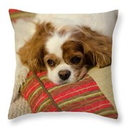 Sweet Dog Face Throw Pillow