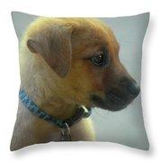 Sweet Faced Cunucu Puppy In Aruba Throw Pillow