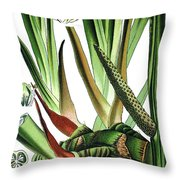 Sweet Flag Or Calamus, Acorus Calamus Throw Pillow
