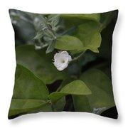 Sweet Jasmine  Throw Pillow