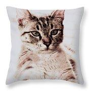Sweet Jaspurr Throw Pillow