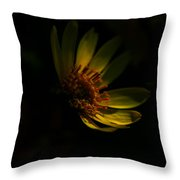 Sweet Mystery Throw Pillow