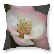 Sweet Refinement Throw Pillow