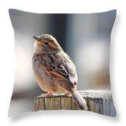 Sweet Sparrow Throw Pillow
