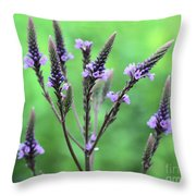 Sweet Vervain Throw Pillow
