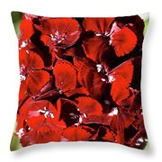Sweet William Macro Throw Pillow