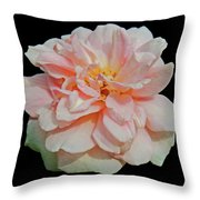 Sweetheart Rose Throw Pillow