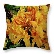 Sweetwater Summer Throw Pillow