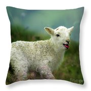 Swet Little Lamb Throw Pillow