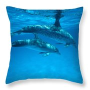 Swimming Dolphins Throw Pillow