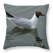 Swimming Gull Throw Pillow