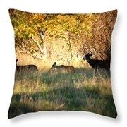 Sycamore Grove Series 10 Throw Pillow