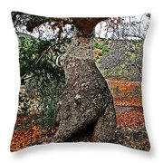 Sycamore Tree And Fall Leaves Throw Pillow