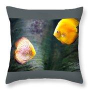 Symphysodon Discus Fishes Throw Pillow