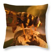 Syrphid Fly On Fossil Crinoid Throw Pillow