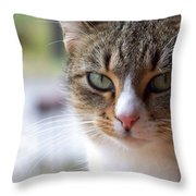 Tabby Cat Portrait Throw Pillow