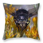 Tachinid Fly Throw Pillow
