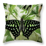 Tailed Jay Butterfly #2 Throw Pillow