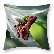 Tailed Jay Butterfly Throw Pillow