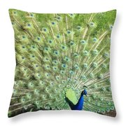 Tailfeathers Throw Pillow