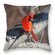 Take My Picture Throw Pillow
