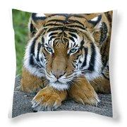 Takin A Break Tiger Throw Pillow