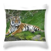 Takin It Easy Tiger Throw Pillow