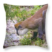 Taking A Drink Throw Pillow