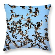 Taking Flight 2 Throw Pillow