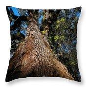 Tall Oak Throw Pillow