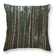Tall Pines After The Rain Throw Pillow