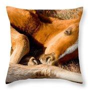 Tangled Foals Throw Pillow