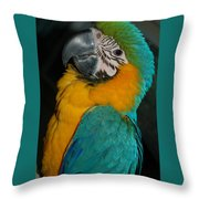 Tango, The Blue And Gold Macaw Throw Pillow