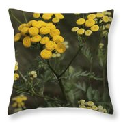 Tansy Blossoms Throw Pillow
