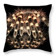 Tarantula Reflection Throw Pillow