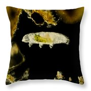 Tardigrade, Or Water Bear, Lm Throw Pillow