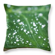 Taro Leaf Throw Pillow