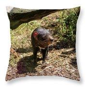 Tasmanian Devil 2 Throw Pillow