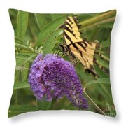 Tattered Tiger Swallowtail Butterfly          August         Indiana Throw Pillow